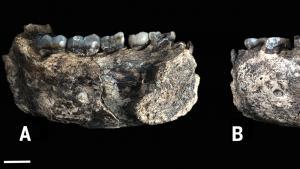 Homo Genus Jaw Oldest Ever Found