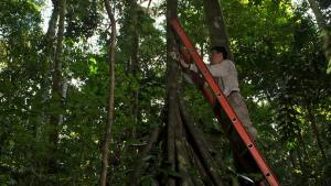 Amazon Forests Really Do Take In Less Carbon During Drought