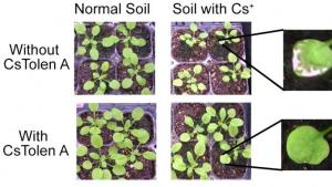 How to Protect Your Plants From Radioactive Soil