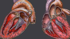 Grow Your Own: Organs