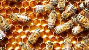 Bees Castes Are More Than Just Jelly